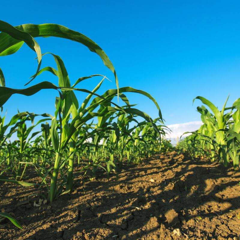 Phyta-Grow® Natural Organic Fertilizers